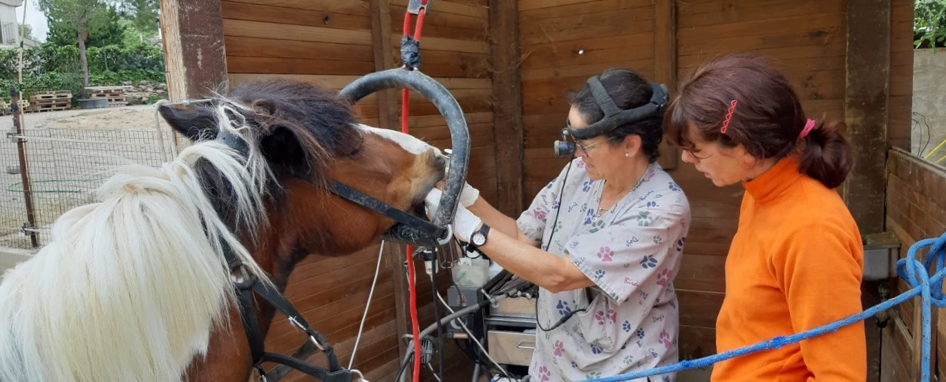 Dentista para caballos - Matilde Duch